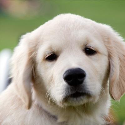 Puppy sitting in Sutton Coldfield