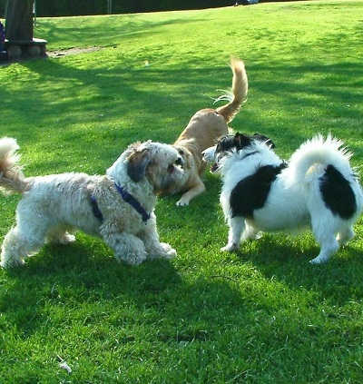 Group of dog walking in Walmley